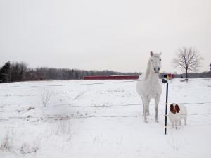 horsegoatwhite